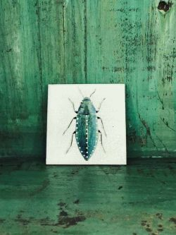 white beetle coaster