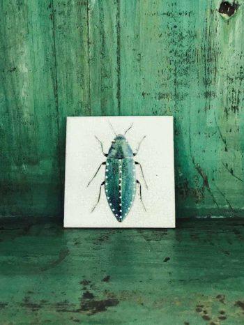 white beetle coaster