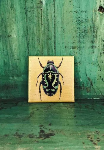 gold beetle coaster