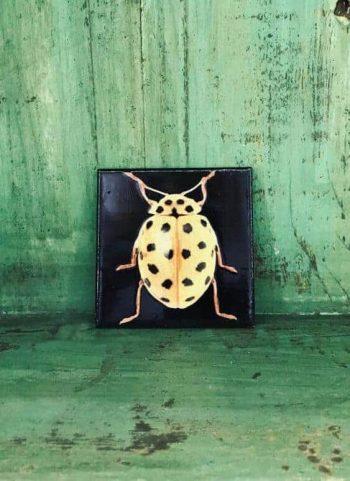 beetle decoupage
