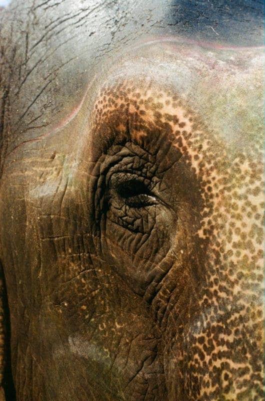 Photo of an elephant's eye