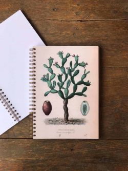 vintage cactus notebook
